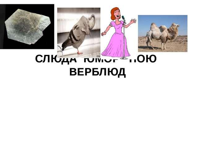 СЛЮДА ЮМОР ПОЮ ВЕРБЛЮД