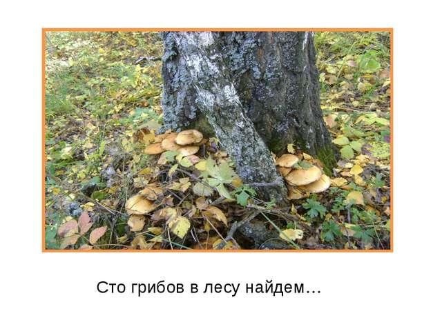 Сто грибов в лесу найдем…