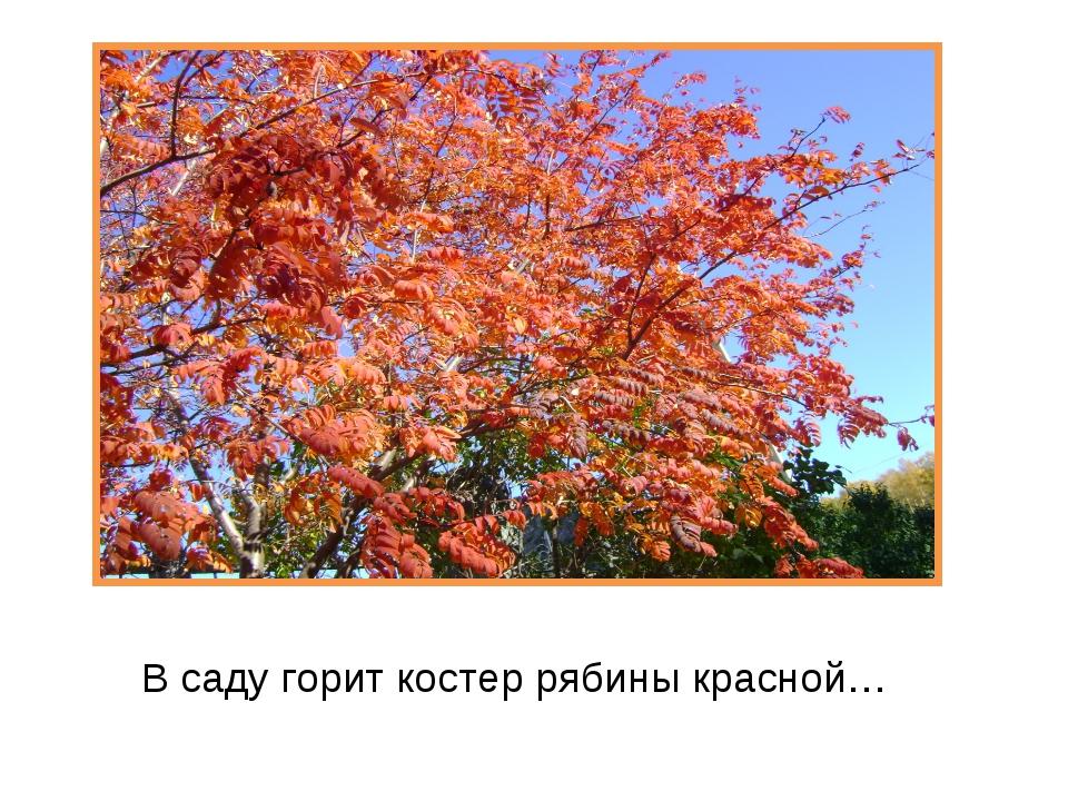 В саду горит костер рябины красной…
