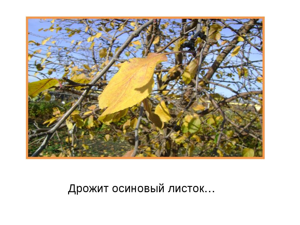 Дрожит осиновый листок…