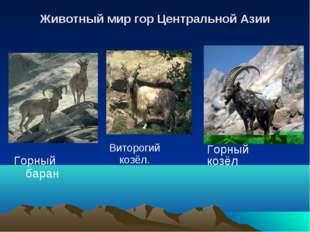 Животный мир гор Центральной Азии Горный баран Виторогий козёл. Горный козёл