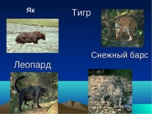 Снежный барс Як Леопард Тигр