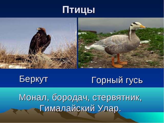 Монал, бородач, стервятник, Гималайский Улар. Горный гусь Беркут Птицы