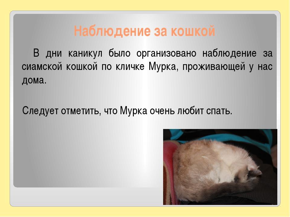 Наблюдение за кошкой В дни каникул было организовано наблюдение за сиамской к...