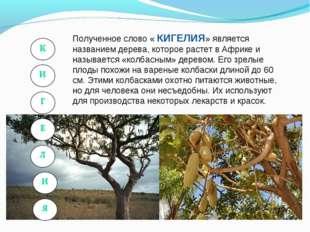 Полученное слово « КИГЕЛИЯ» является названием дерева, которое растет в Африк