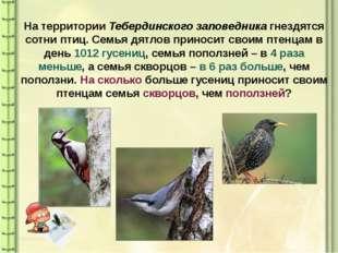 На территории Тебердинского заповедника гнездятся сотни птиц. Семья дятлов пр