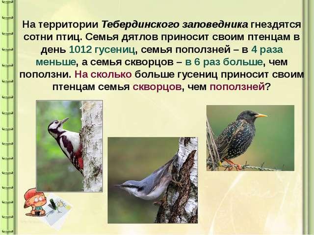 На территории Тебердинского заповедника гнездятся сотни птиц. Семья дятлов пр...