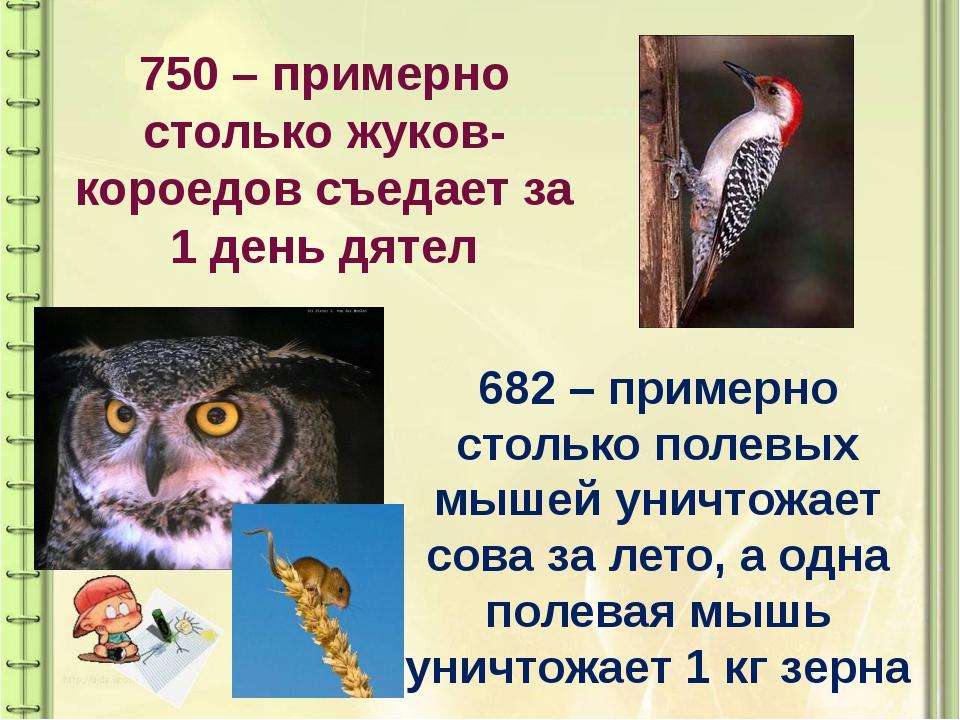 750 – примерно столько жуков-короедов съедает за 1 день дятел 682 – примерно...