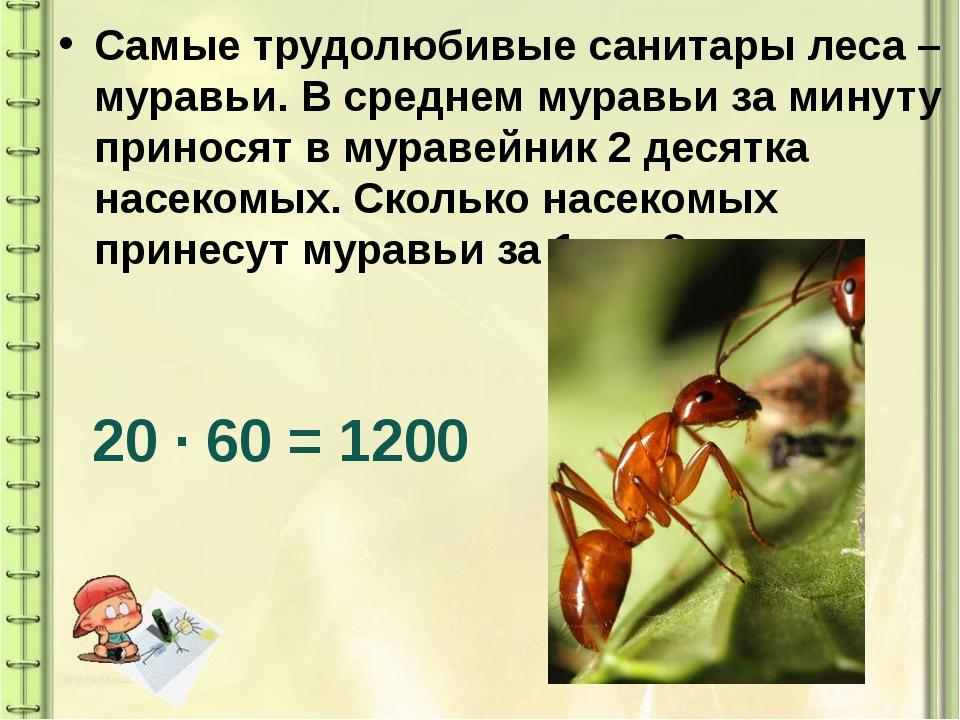 Самые трудолюбивые санитары леса – муравьи. В среднем муравьи за минуту прино...