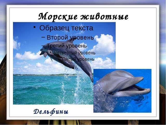 Морские животные Дельфины
