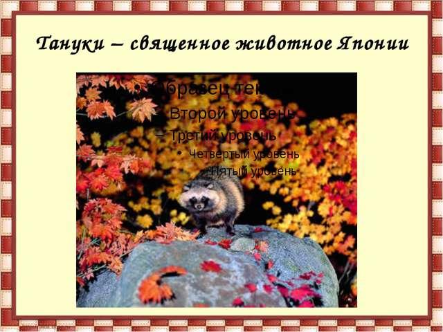 Тануки – священное животное Японии