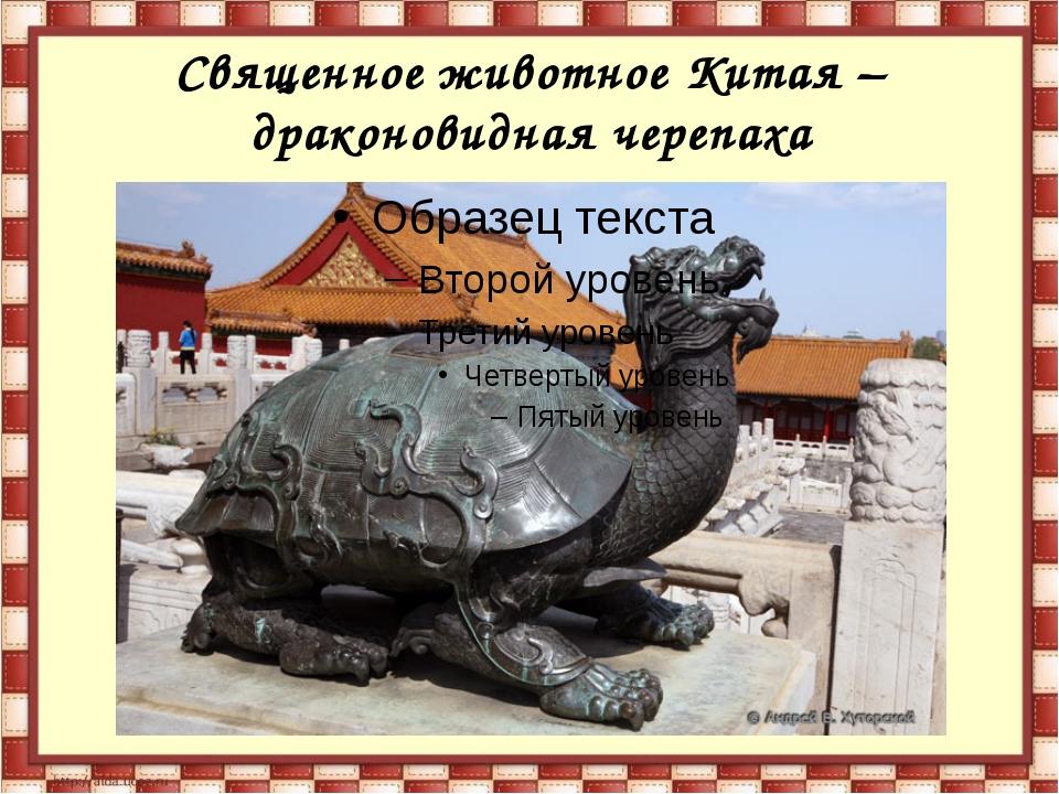 Священное животное Китая – драконовидная черепаха
