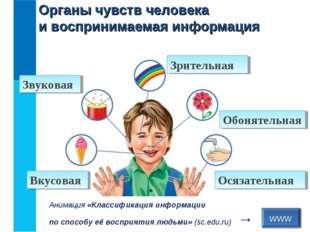 Органы чувств человека и воспринимаемая информация www Анимация «Классификаци