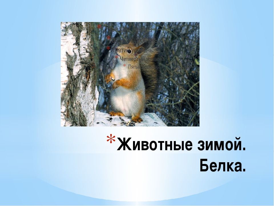 Животные зимой. Белка.