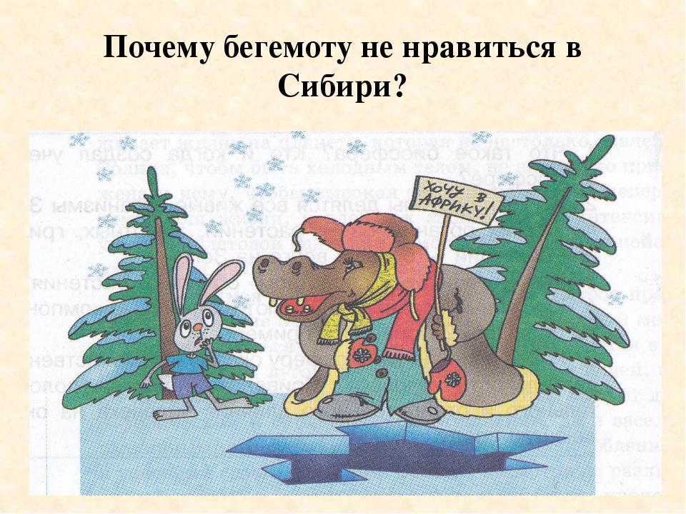 Почему бегемоту не нравиться в Сибири?