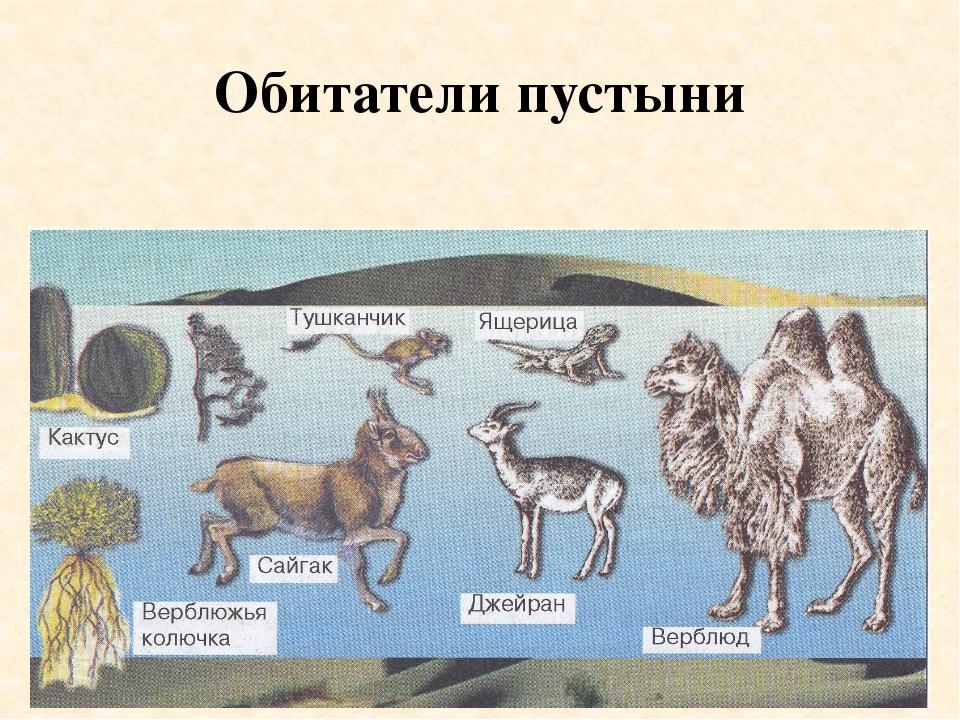 Обитатели пустыни