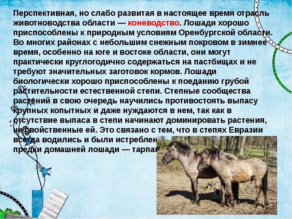 Перспективная, но слабо развитая в настоящее время отрасль животноводства обл...