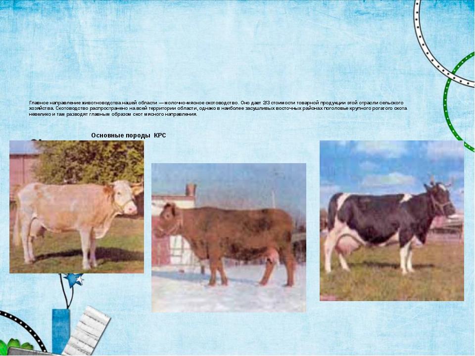Главное направление животноводства нашей области — молочно-мясное скотоводст...