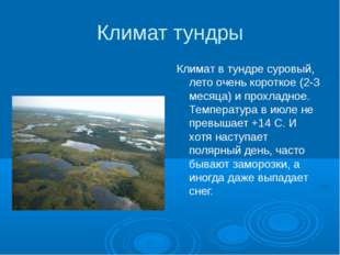 Климат тундры Климат в тундре суровый, лето очень короткое (2-3 месяца) и про