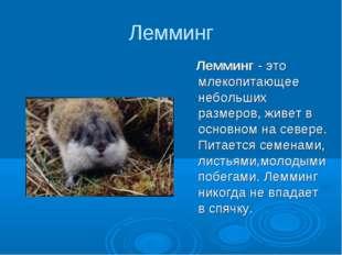 Лемминг Лемминг - это млекопитающее небольших размеров, живет в основном на с