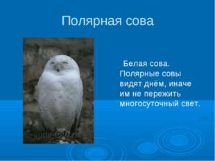 Полярная сова Белая сова. Полярные совы видят днём, иначе им не пережить мног