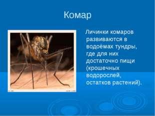 Комар Личинки комаров развиваются в водоёмах тундры, где для них достаточно п