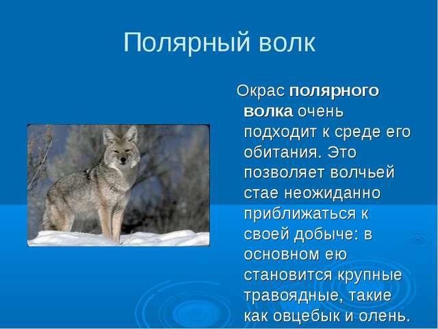 Полярный волк Окрас полярного волка очень подходит к среде его обитания. Это...