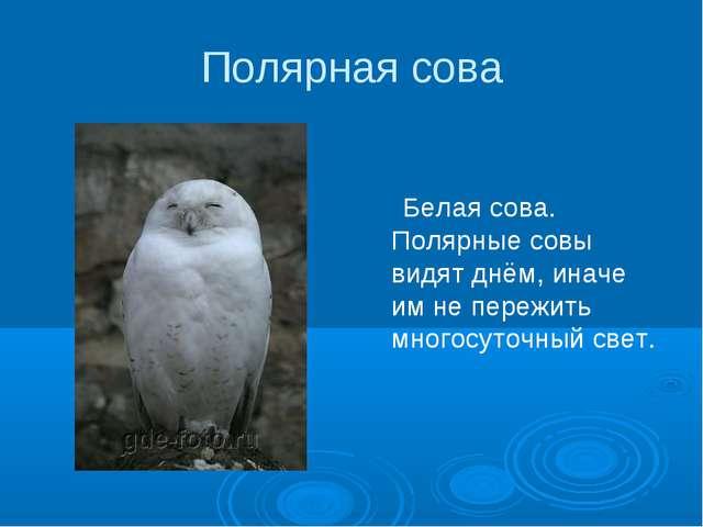 Полярная сова Белая сова. Полярные совы видят днём, иначе им не пережить мног...