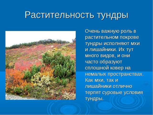Растительность тундры Очень важную роль в растительном покрове тундры исполня...