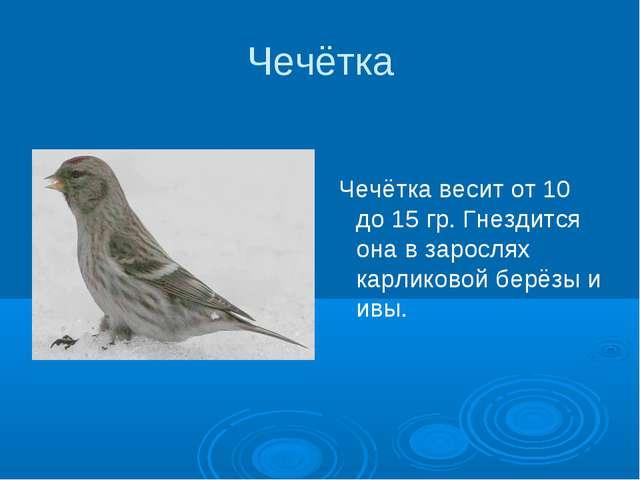 Чечётка Чечётка весит от 10 до 15 гр. Гнездится она в зарослях карликовой бер...