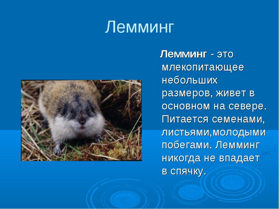 Лемминг Лемминг - это млекопитающее небольших размеров, живет в основном на с...