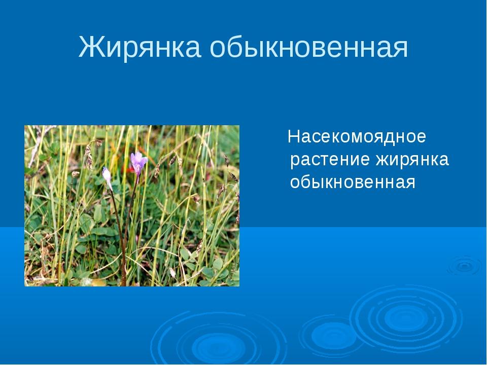 Жирянка обыкновенная Насекомоядное растение жирянка обыкновенная