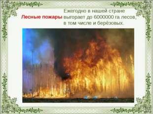 Лесные пожары Ежегодно в нашей стране выгорает до 6000000 га лесов, в том чис