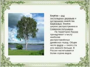 Берёза— род листопадных деревьев и кустарников семейства Берёзовые. Берёза ши