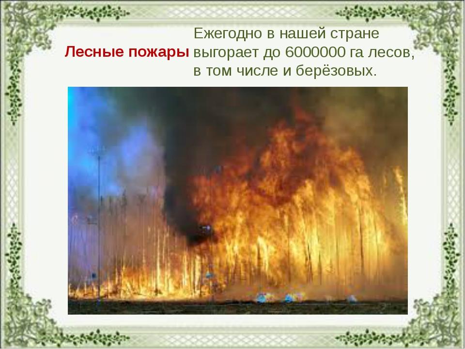 Лесные пожары Ежегодно в нашей стране выгорает до 6000000 га лесов, в том чис...
