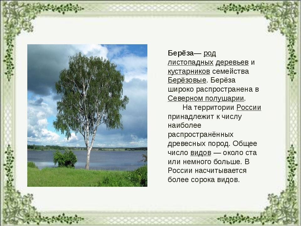 Берёза— род листопадных деревьев и кустарников семейства Берёзовые. Берёза ши...