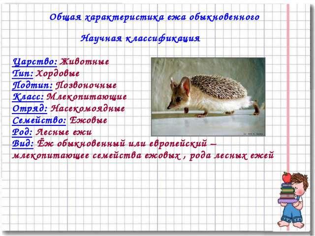 Общая характеристика ежа обыкновенного Научная классификация Царство: Животны...