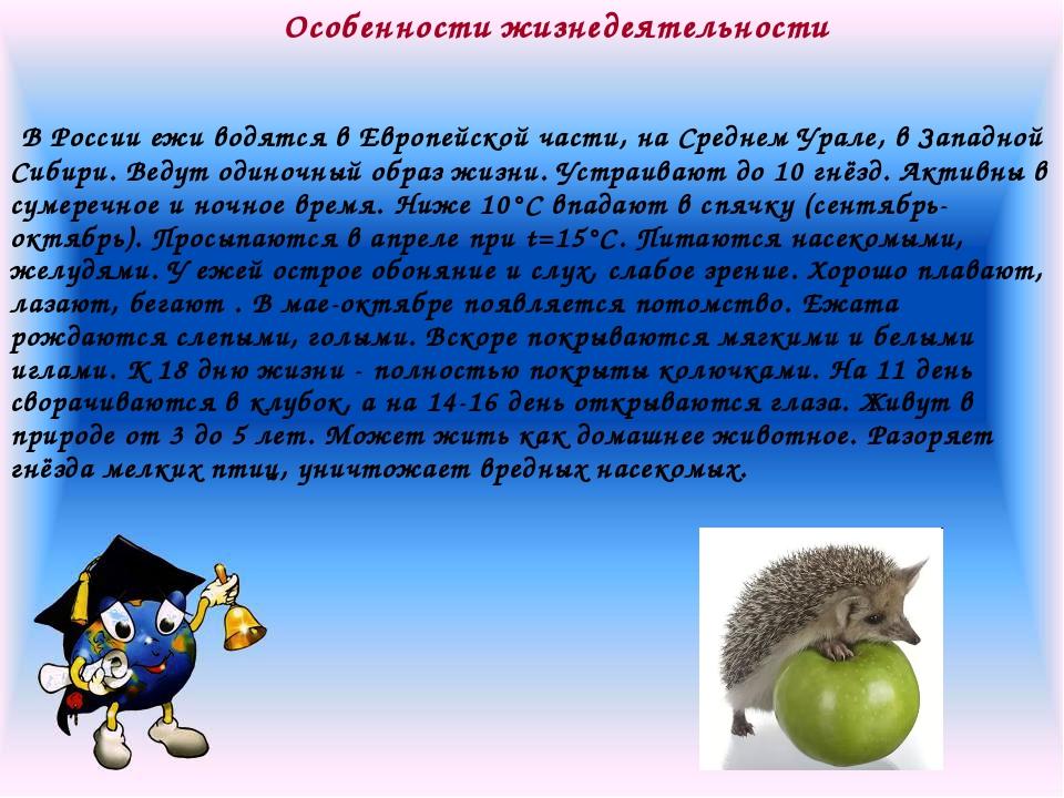 Особенности жизнедеятельности В России ежи водятся в Европейской части, на Ср...