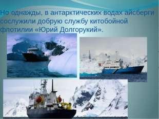 Но однажды, в антарктических водах айсберги сослужили добрую службу китобойно