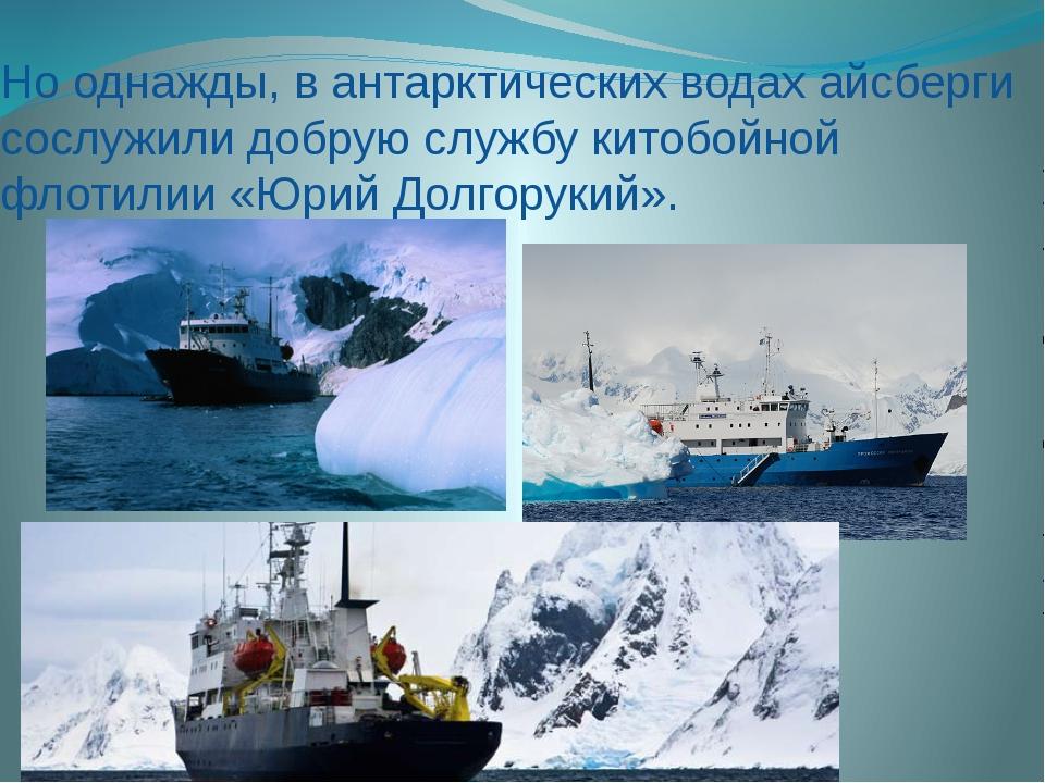 Но однажды, в антарктических водах айсберги сослужили добрую службу китобойно...