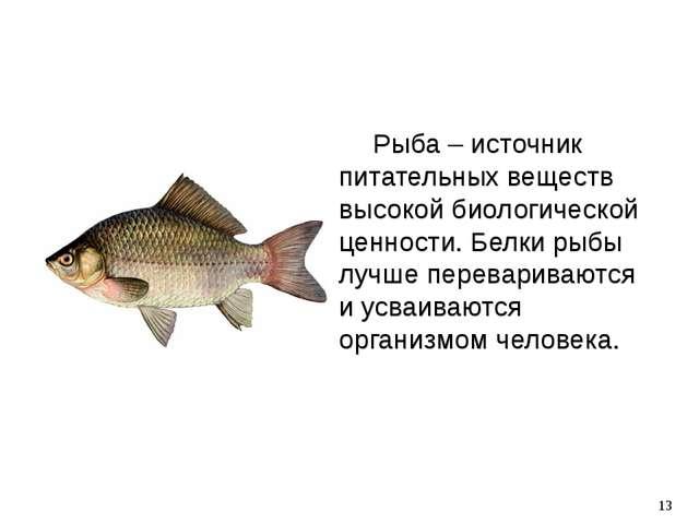 Рыба – источник питательных веществ высокой биологической ценности. Белки ры...