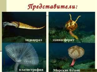 Представители: археокринус астраспис Брюхоногие моллюски гомилозои гониоцераз