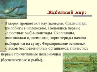 Животный мир: В морях процветают наутилоидеи, брахиоподы, трилобиты и иглокож