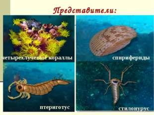 Представители: акантоды арктинурус биркения дейфон морская лилия ортоцератида