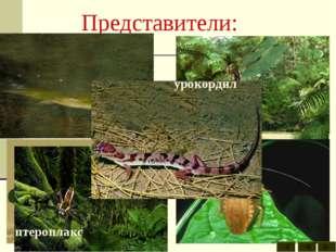 Представители: бабочки вестлотиана кузнечик многоножка пауки птероплакс стрек