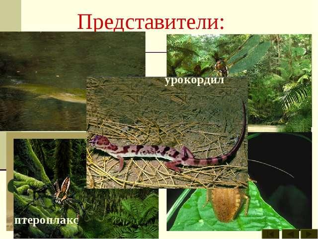 Представители: бабочки вестлотиана кузнечик многоножка пауки птероплакс стрек...