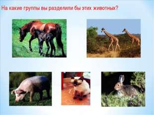 На какие группы вы разделили бы этих животных?