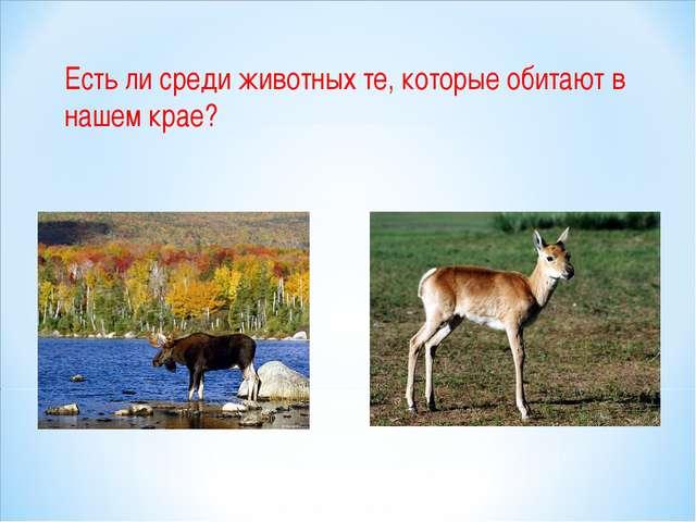 Есть ли среди животных те, которые обитают в нашем крае?