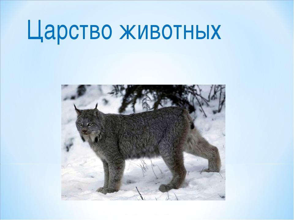 461 общая характеристика царства животные