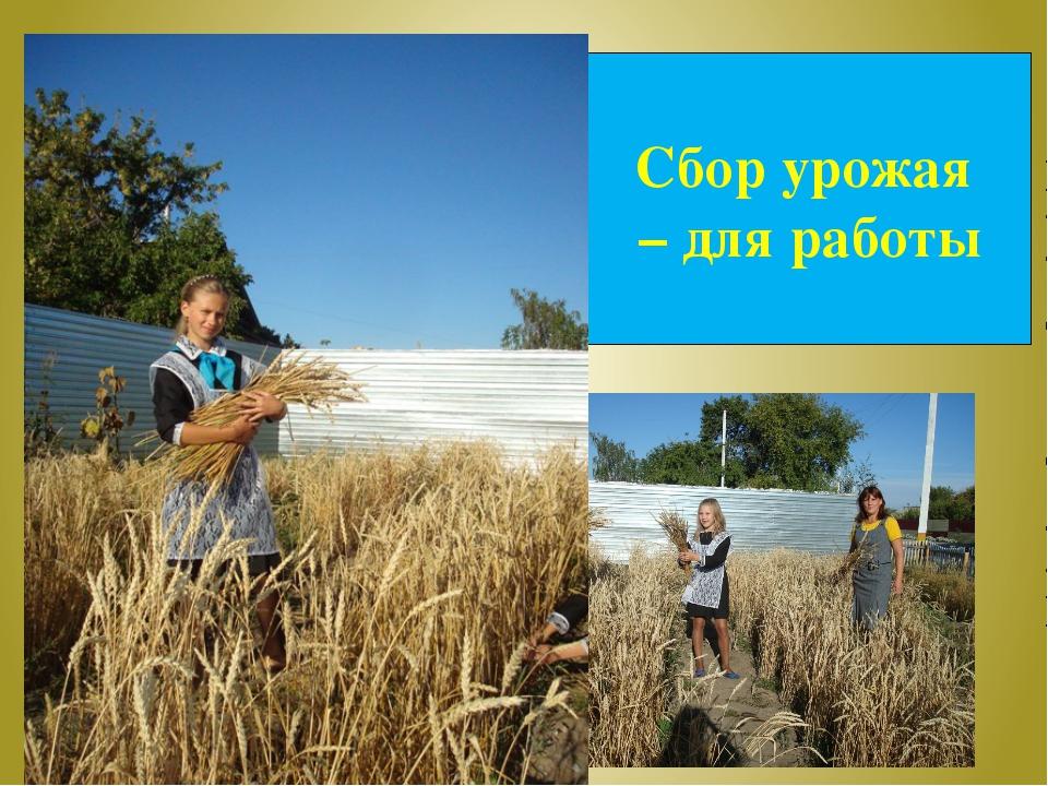 Сбор урожая – для работы